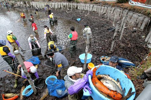 水を抜いた池で捕獲された魚のうち、外来魚は駆除の対象となった