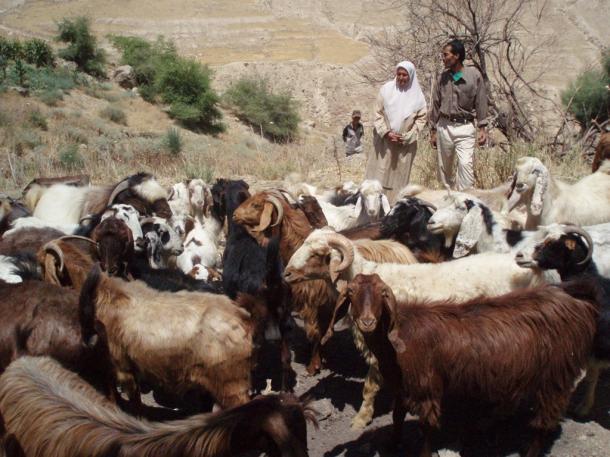 ヨルダンのカラク県でJICAが実施した女性の地位向上のための事業の支援を受け て、ヤギの飼育を行った女性と夫=2007年7月、川上泰徳撮影