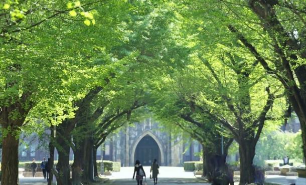 新緑の東大キャンパス(東大ホームページより)