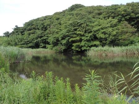 緑地エリアの中央にある池と背後の山