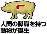 人の臓器を持つ「キメラ動物」は人か動物か?