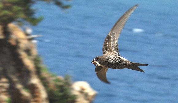 写真・図版:「飛ぶ動物」の進化論