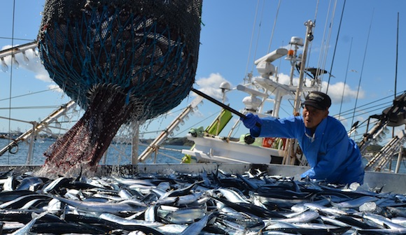 日本の漁獲量管理は不十分?