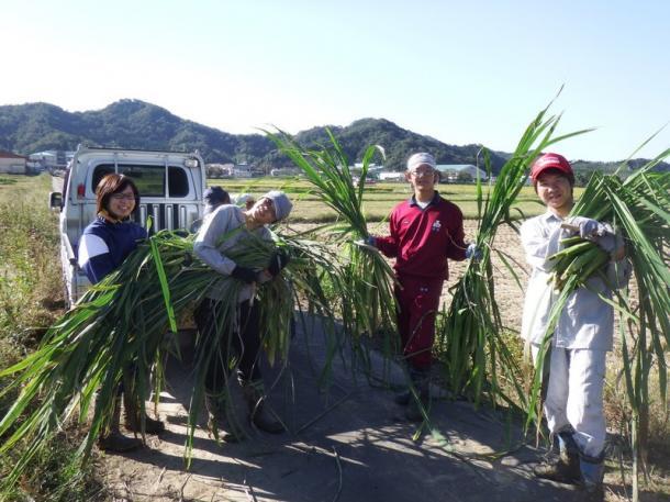大学COCプラス事業で、特産食材の収穫作業を学ぶ鳥取大学の学生たち=鳥取大学HPより