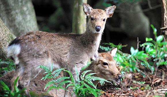 人と野生動物の共生を考える
