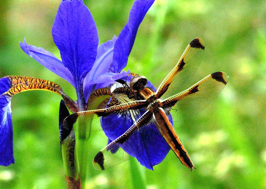 やれば楽しい「昆虫標本づくり」