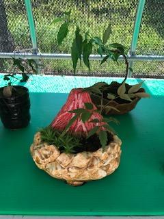 富士山をモチーフにした容器でつくったミニ盆栽。容器の色や植物は、受刑者の好みで変わり、受刑者の個性が光る