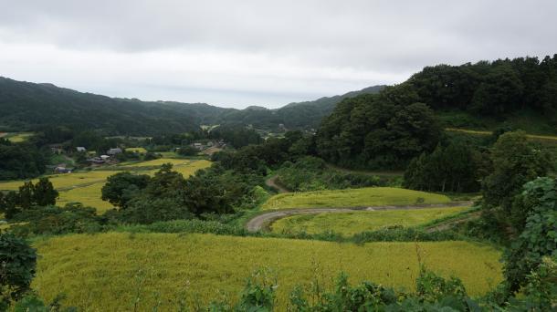 斜面に棚田が広がる徳合地区。奥には日本海を望む=9月、新潟県糸魚川市。写真と本文は直接関係がありません