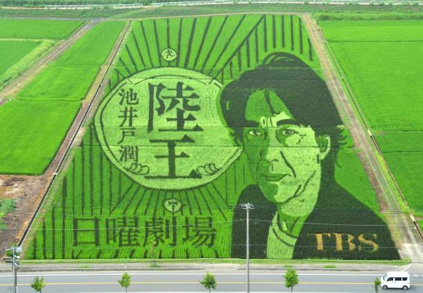 「陸王」とコラボレーションした田んぼアート=行田市201707