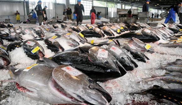 写真・図版:マグロ漁獲規制をどうする?