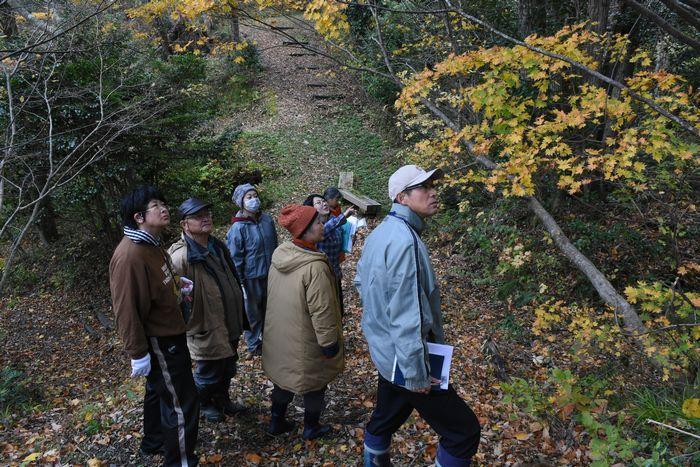 写真・図版 : 再生されたナラの木を見て回る市民団体の関係者ら=新潟県佐渡市