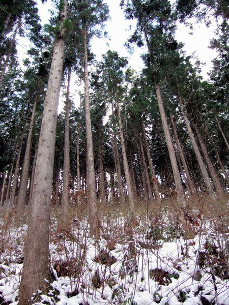 巨額の債務が隠されている林業界