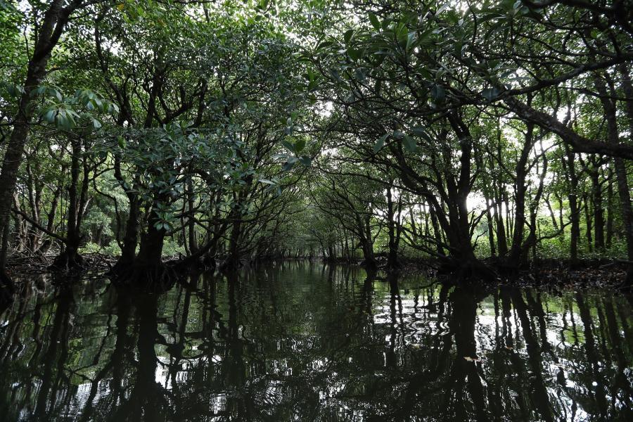 観光客の制限を求められた奄美・沖縄