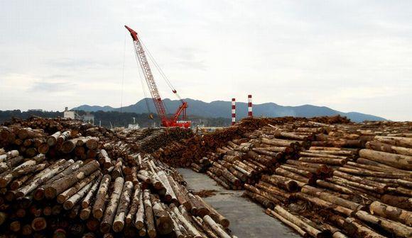 輸出が急増する日本の木材