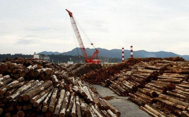 日本の林業を考える