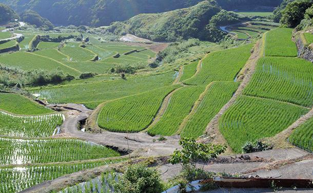 「種子法」廃止で日本の米が消えるのか?