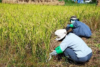 農家への戸別所得補償制度をどう評価するか