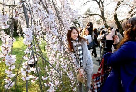 円安が追い風、京都の外国人観光客のいま