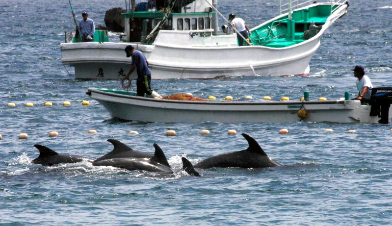 イルカ漁に反対するアメリカの狙い