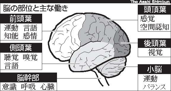 デジタル情報と脳の働き